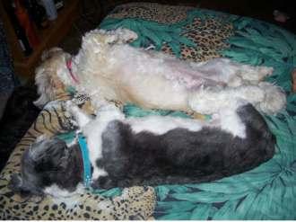 Zali & Nimo sleeping on daybed
