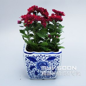 Free-shipping-Chinese-style-blue-and-white-bonsai-ceramic-pots-rhyme-elegant-potted-flowers-pots-with