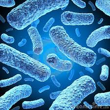 images BACTERIA