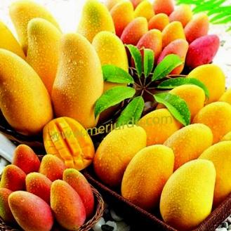 mango-fruit-wallpaper-free-download