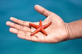 starfish-1198230__180