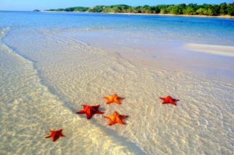 starfish-favim