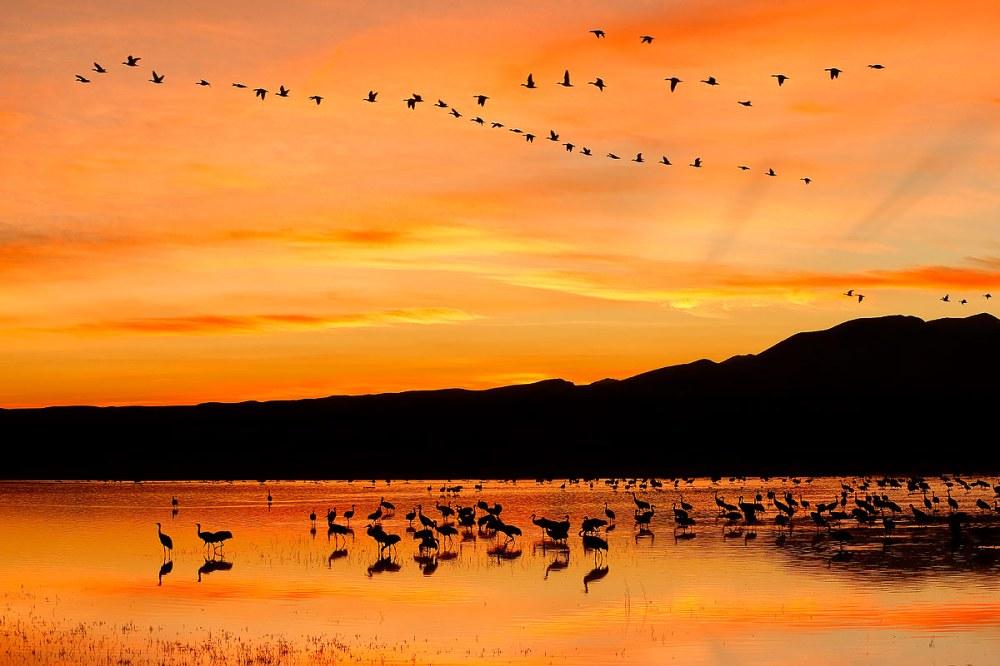 sunset-with-orange-sky-at-the-crane-pool-1_e7t4060-bosque-del-apache-nwr-san-antonio-nm-usa