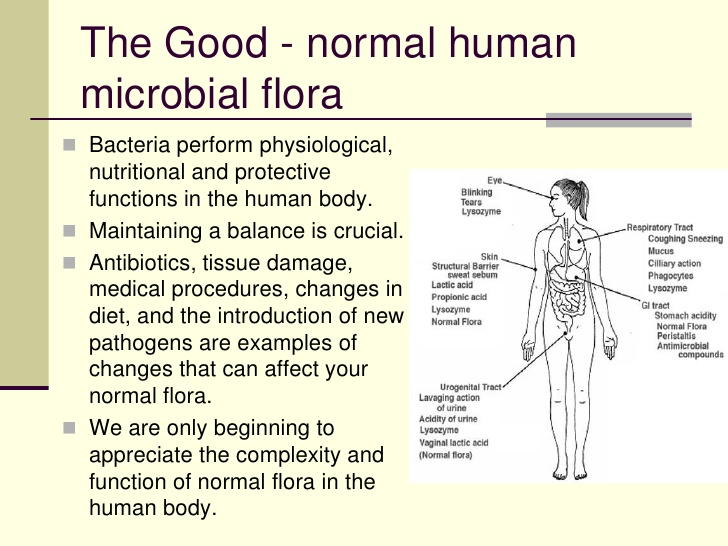Healthy Bacteria And Cultured Foods