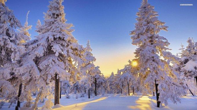 tree-forest-sun-snow-winter