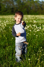 12966362-little-boy-collects-daisies