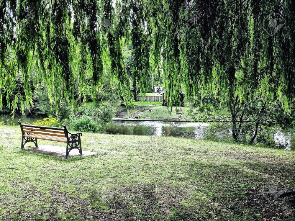 21305461-Bench-under-weeping-willow-tree-opposite-lake-Stock-Photo