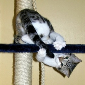 cat-tail-chasing