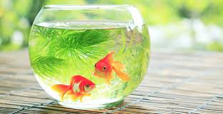 imagesfish bowl