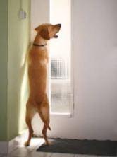 index dog barking