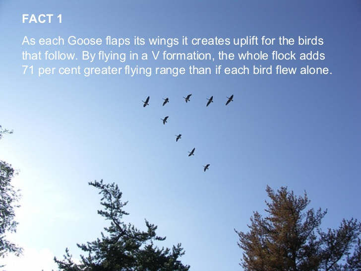 "TRUE STORIES: ""The geese"" – bodyandsoulnourishmentblog"