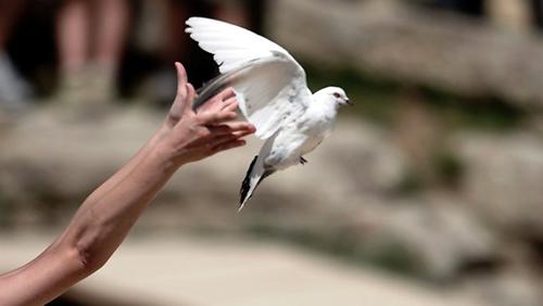 Letting-Go-Bird-5