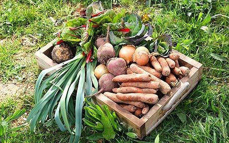 p_fresh-veg_1539560c