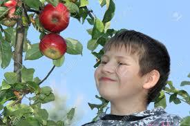 boy apple