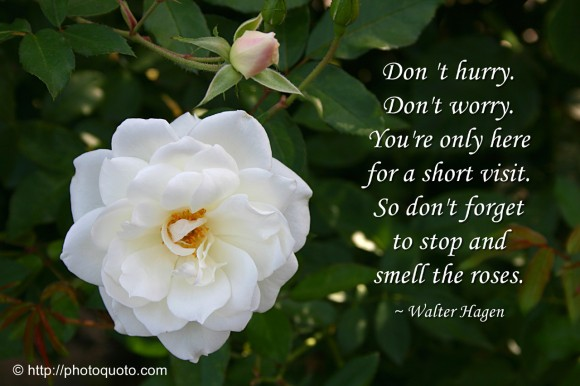 dont-hurry-dont-worry-youre-only-here-for-a-short-visit-so-dont-forget-to-stop-and-smell-the-roses-flower-quote