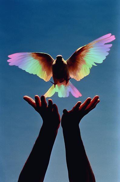 Magical bird takes flight.
