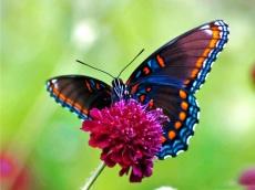free live butterfly wallpaper 201411