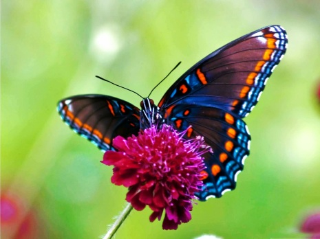 free live butterfly wallpaper 201411