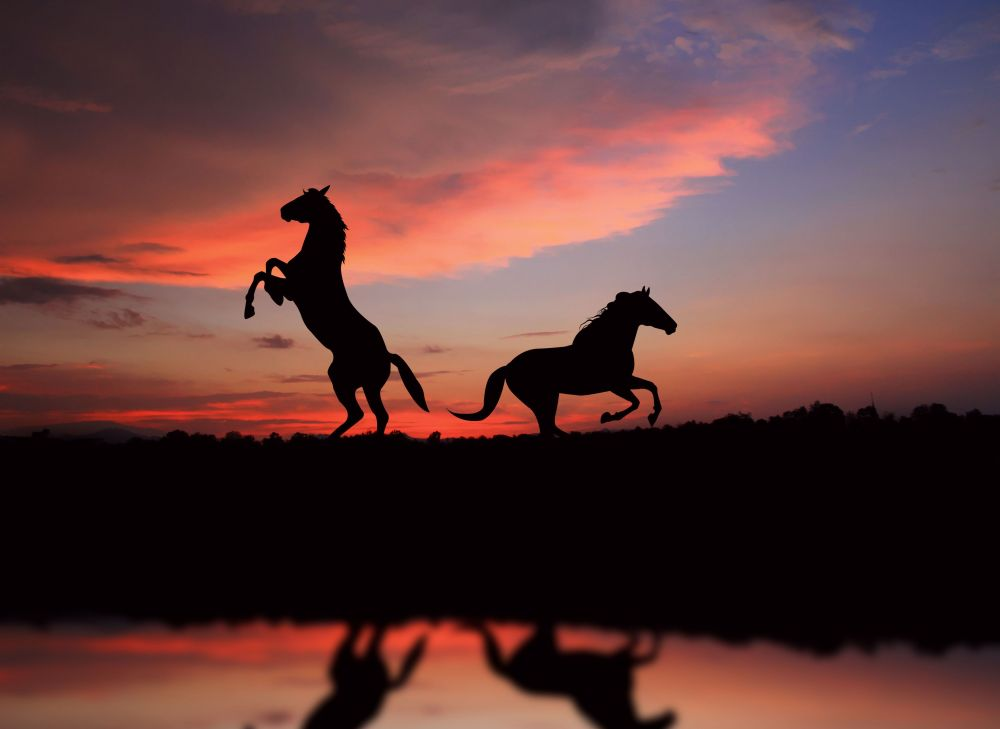 horse-over-sunset-5912x4311
