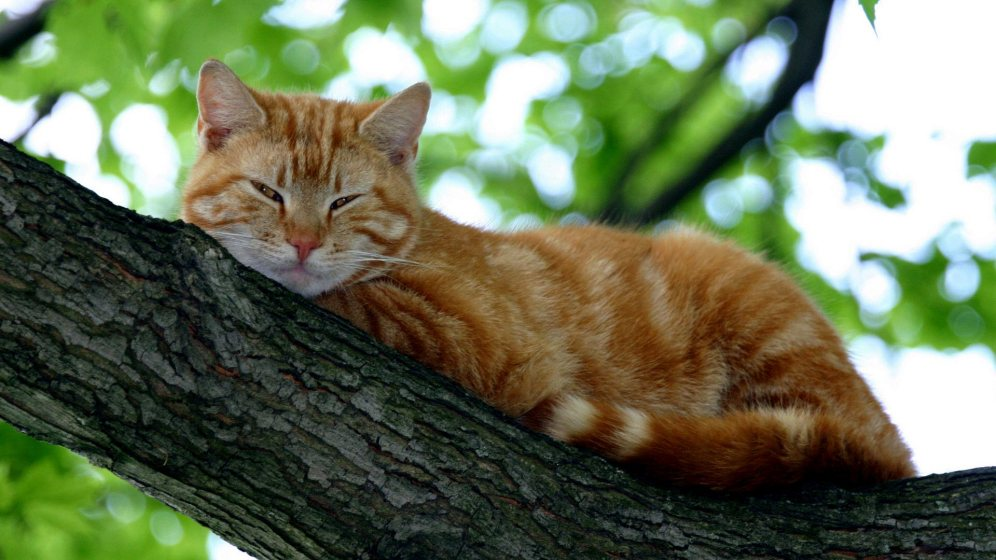 images-of-cats-8