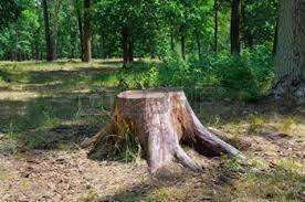 images tree stump