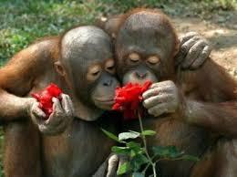 imagesroe monkey