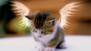 index cat angel;