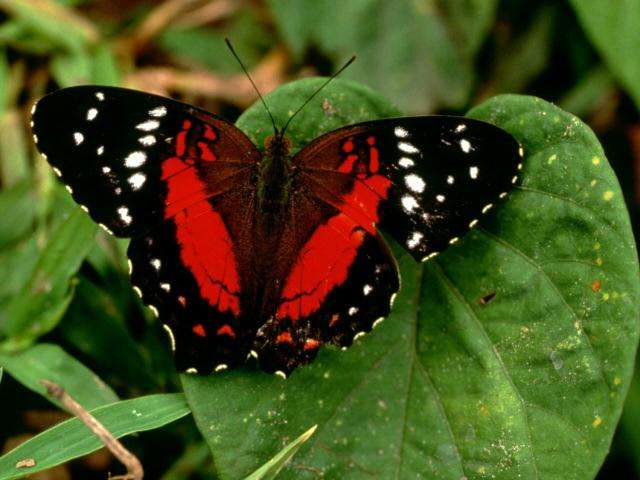 la-mariposa-1