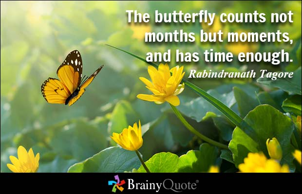 rabinthe butterfly counts days