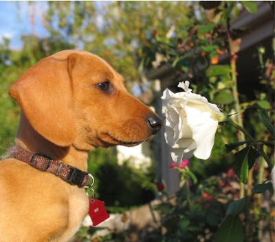 smell_the_roses