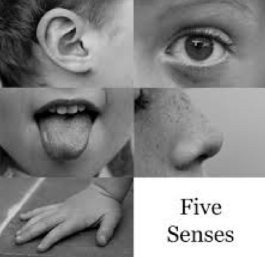 What is Sensory Language