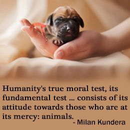 """Animal Cruelty Quotes Glamorous Quotes """"Animal Love"""" And """"Love For The Animals"""