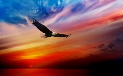 animals_independence_day_4th_of_july_eagle_bald_bird_sunset_154532_detail_thumb