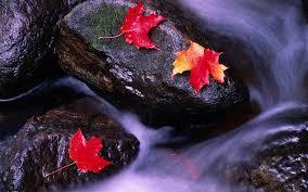 images-leaf-rock