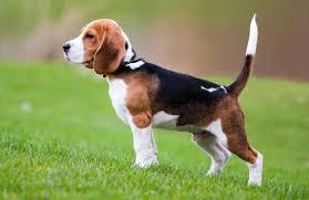 imageshound