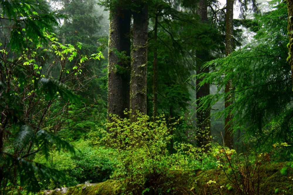 old-growth-coastal-forest