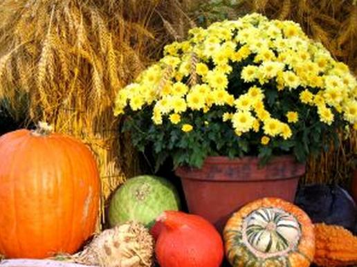 thanksgiving-marketing