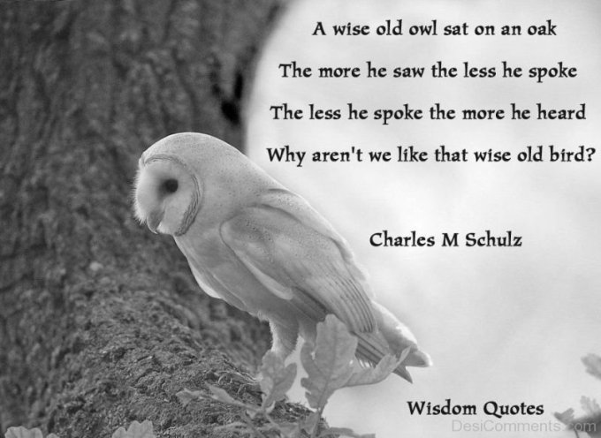 a-wise-old-owl-dc01