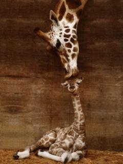 animal-kiss