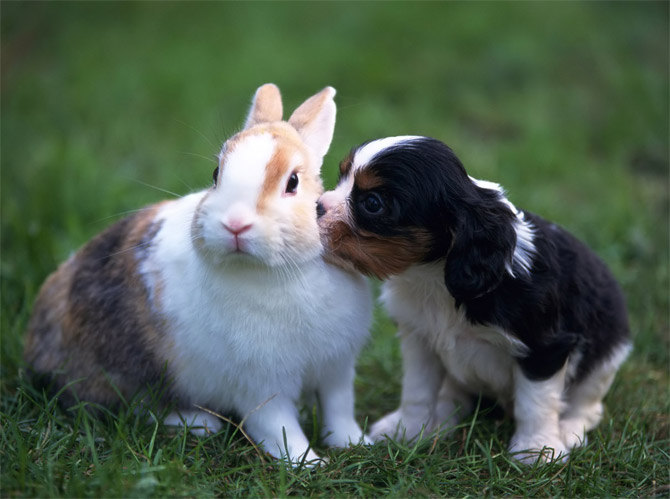 animal-kissing-pictures-11