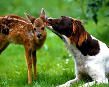 animal-kissing-pictures-2