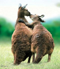 animals-kissing-009