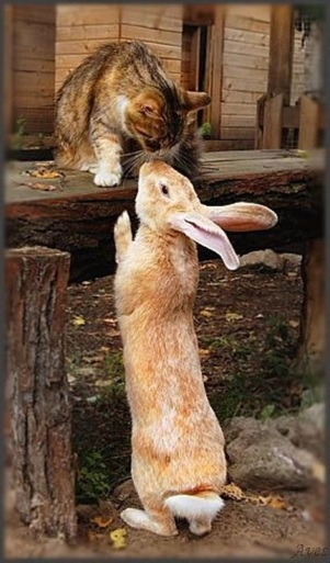 animals-kissing-pictures-13