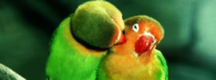 bird_kiss