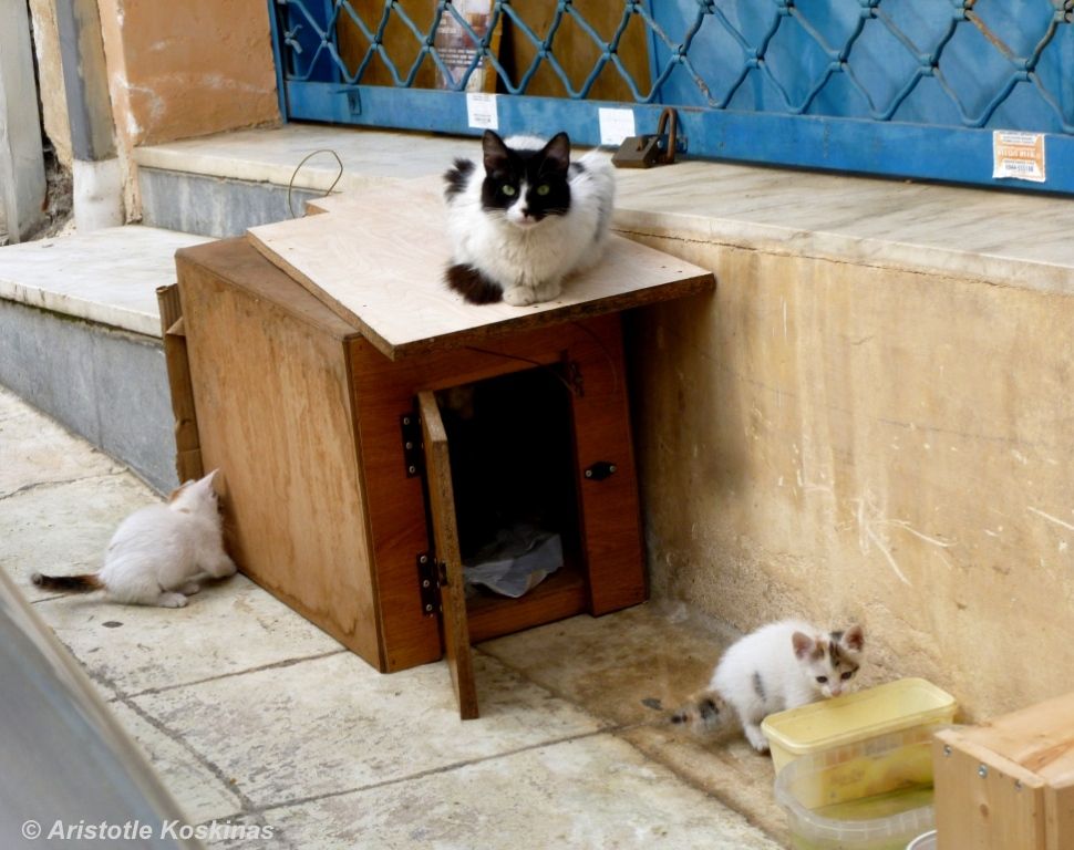 cat-shelter-on-sidewalk