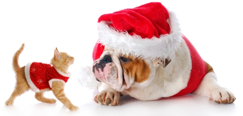 adorable cat and dog dressed up for christmas with reflection on white background