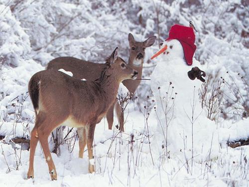 christmas-animal