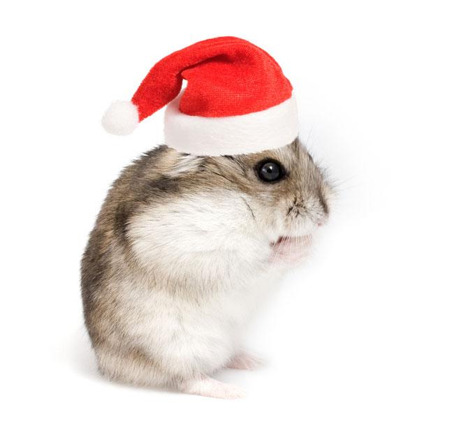 christmas_pets_3-14