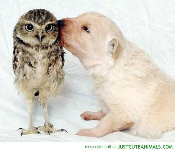 cute-animal-pictures-dog-kissing-young-owl