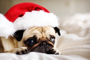 cute-christmas-animals-41-y3lca96pjl5vfvu0a8owuw